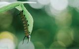 A Caterpillar Eats Through the Week