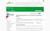 Nitrogen-Fixing Bacteria in Root Nodules of Leguminous Plants