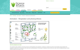 Animation - Respiration and Photosynthesis