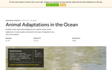 Animal Adaptations in the Ocean