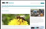 The Bee-utiful Bee